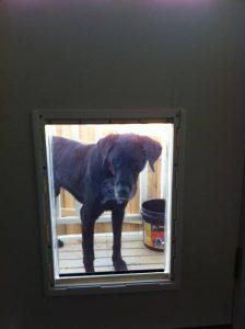 sureflap pet door instructions